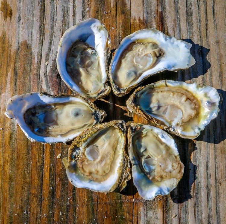 Pleasure-House-Oysters-Half-Dozen